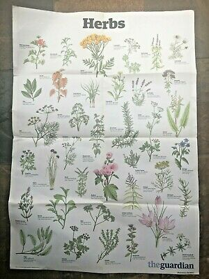 The Guardian A1.  Wallcharts Posters - Cheese - Salads - Herbs • 6£